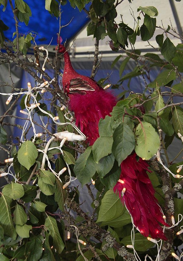 Syyshäät venetsialaisessa puutarhassa