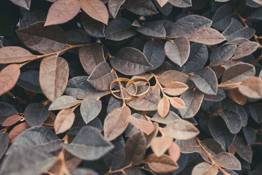 kihlasormukset pensaan lehdillä
